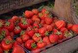 Spilman Summer Fruits